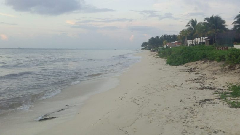 Playa del Carmen sin sargazo