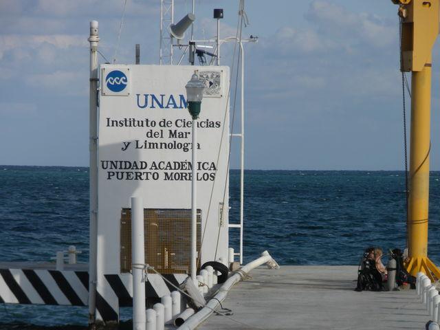 UNAM, investiga si el sargazo afecta la calidad del agua del mar