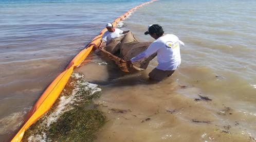 Alertan por una mayor cantidad de sargazo en Quintana Roo en 2019