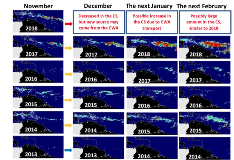 UNAM alerta por una cantidad mayor de sargazo hacia Quintana Roo para este 2019