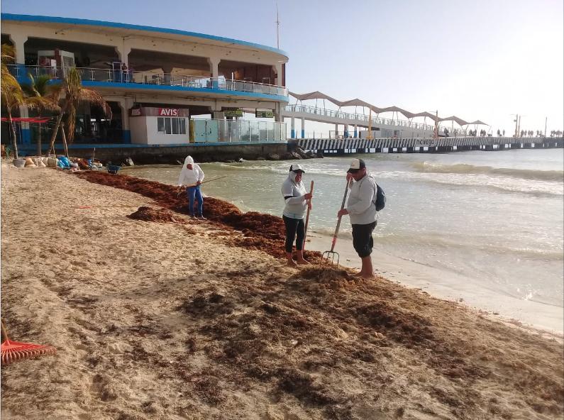 Sargazo afecta los servicios acuáticos en Qroo.