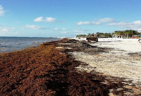 Anuncian Plan de Acción para atender de manera integral arribo de sargazo en Caribe Mexicano