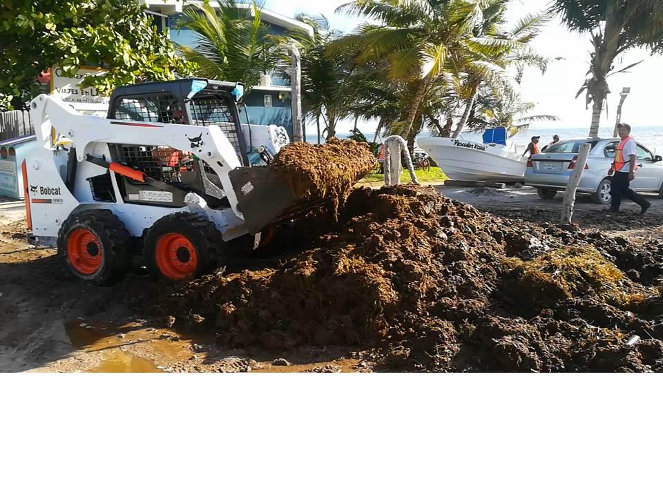 Prepara Quintana Roo 'blindaje' contra llegada masiva de sargazo