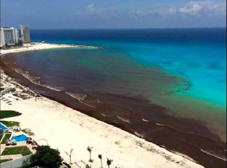 Vuelve el sargazo a Cancún