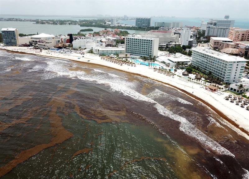 Playa del Carmen: se duplica el sargazo y el temor de los hoteleros