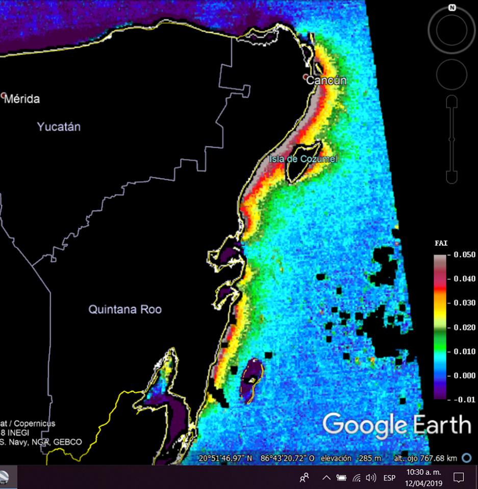 Se pronostica el arribo de gran cantidad de sargazo en las próximas horas en Qroo