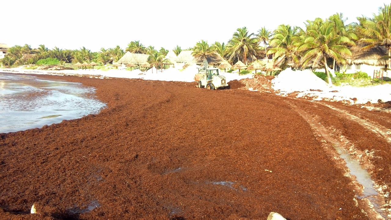 Especialistas analizarán en Cancún problema del sargazo
