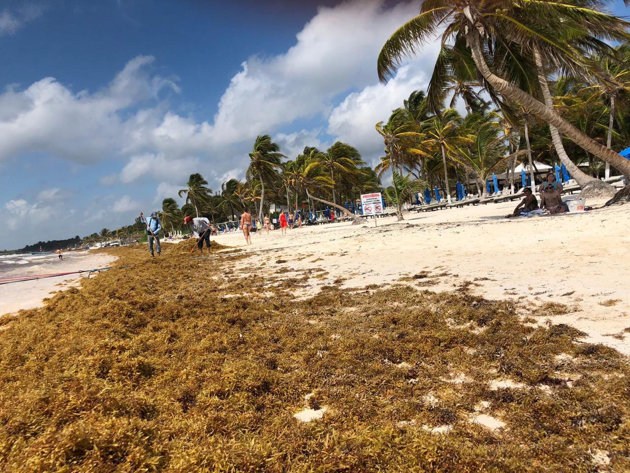 Solo es cuestión de días para afecte el Sargazo en Cancún