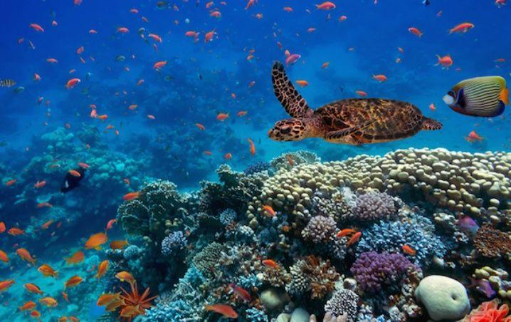 El Movimiento Mundial por la conservación de océanos, promueve un baile