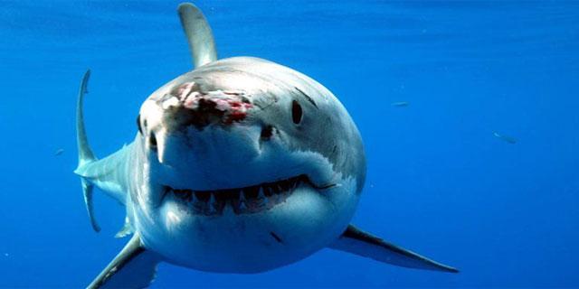 Tiburón ataca a pescador en Holbox