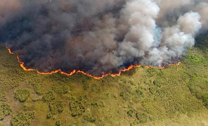 El incendio de Sian ka'an y sus efectos a la biodiversidad