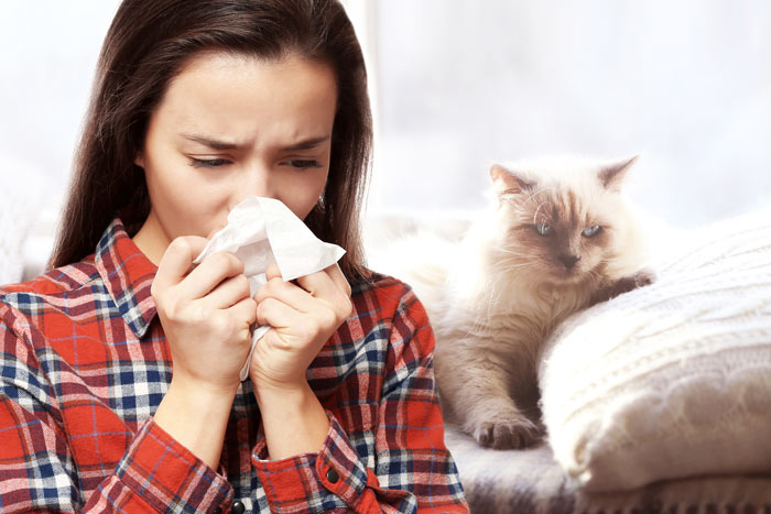 Desarrollan vacuna contra alergia a los gatos