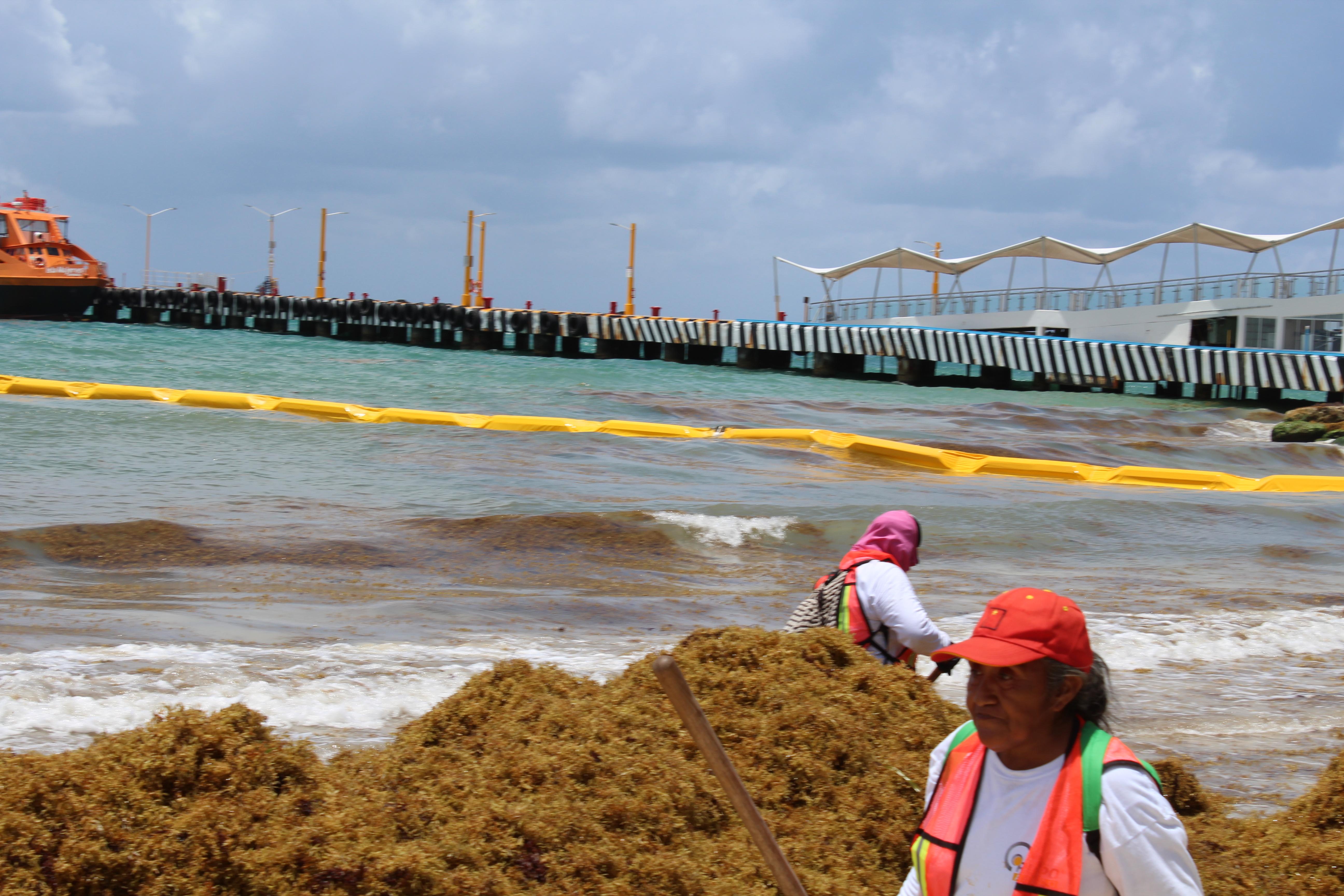 Es necesario fortalecer la política costera: Alfredo Arellano