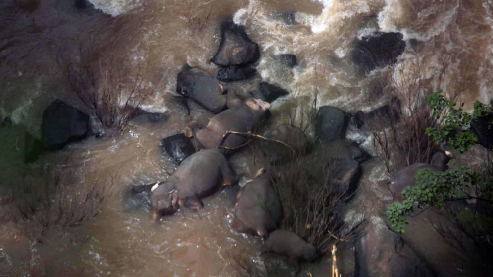 Mueren 11 al tratar de salvar a cría en Bangkok