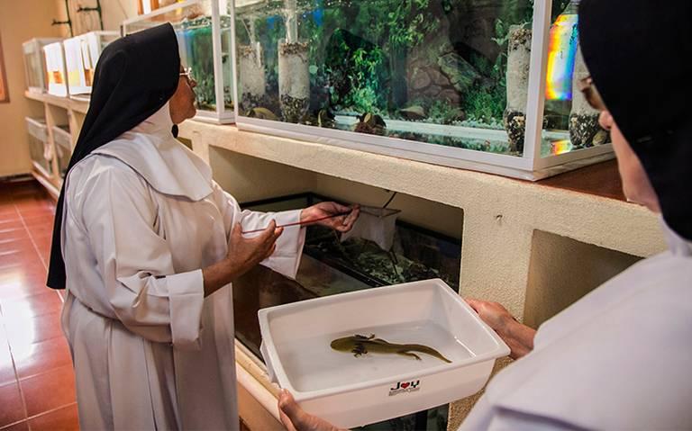 Investigan a dos monjas en Sicilia por estar embarazadas