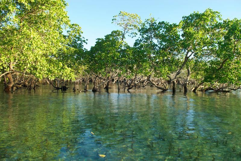 Carbono azul, una clave importante para combatir el calentamiento global