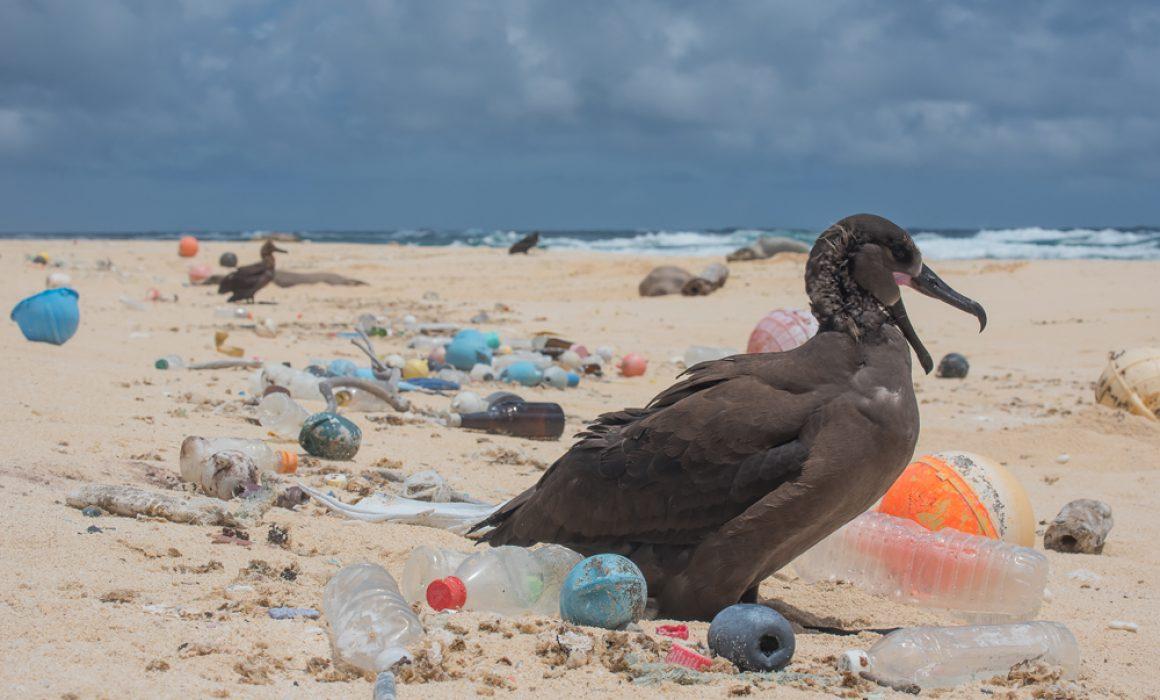 Ayuntamiento de Isla Mujeres está creando conciencia eliminando el uso de bolsas plásticas
