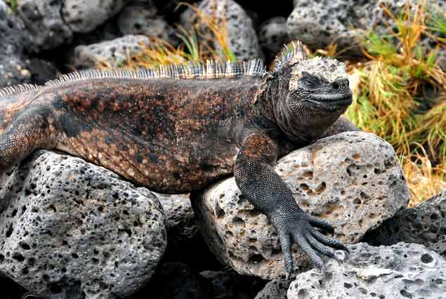 Estudian especies extintas en las Islas Galápagos