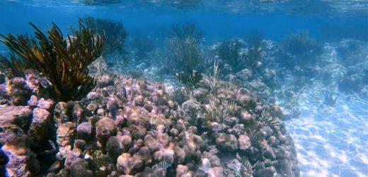 Akumal, ejemplo en la restauración del coral