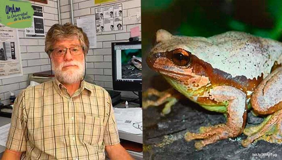 Nueva especie de rana adoptará nombre de profesor de la UNAM